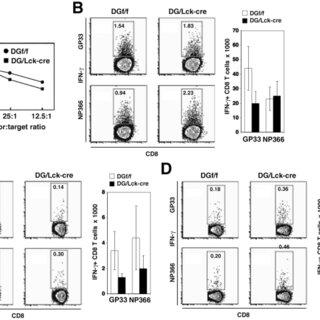 (A) DG/Lck-cre mice had smaller thymi compared to the DGf