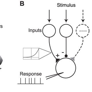 (PDF) Inferring Nonlinear Neuronal Computation Based on