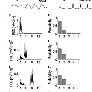 (PDF) Phase-locking of bursting neuronal firing to
