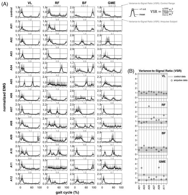Upper leg EMG activation during walking.Vastus Lateralis