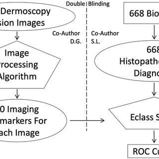 Blue gray color (a simple imaging biomarker). Referred to