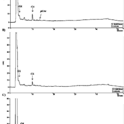 Euglena Diagram Blank Guitar String Names Differences In The Phenolic Compound Of Hydrolysed Extracts Gracilis A Control