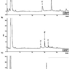 Euglena Diagram Blank 1999 F150 Wiring Total Phenolic Content A And Flavonoids B From Differences In The Compound Of Hydrolysed Extracts Gracilis Control
