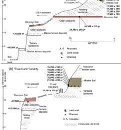 diagram showing stratigraphy of the a yardang canyon section and b tree [ 850 x 1104 Pixel ]