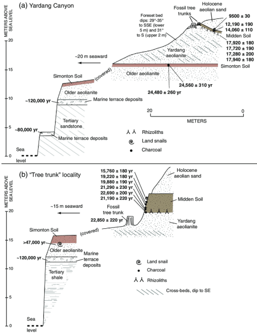 small resolution of diagram showing stratigraphy of the a yardang canyon section and b tree