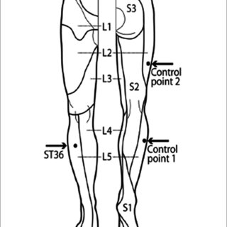 (PDF) Sustained Effects of Acupuncture Stimulation