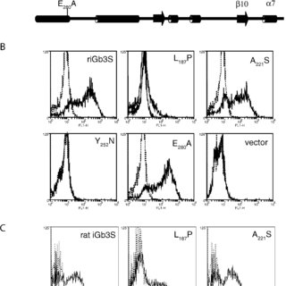 (PDF) Humans Lack iGb3 Due to the Absence of Functional