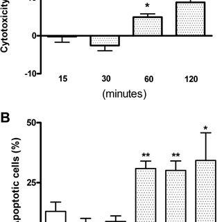Expression of membrane-associated ER ␣ (mER ␣ ) in