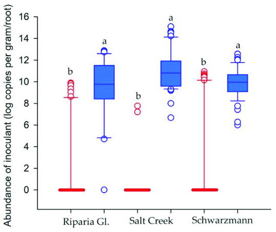 DNA copies per gram of roots (log(x)) of Rhizoglomus ...