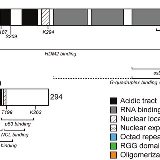 Models for the coordination of DNA damage repair pathways
