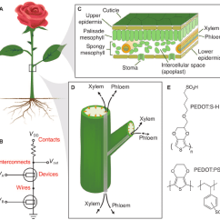 Diagram Of A Flowering Plant With Label Mobile Home Ac Wiring Basic Physiology And Analogy To Electronics B Such As Rose Consists Roots Branches Leaves Flowers Similar