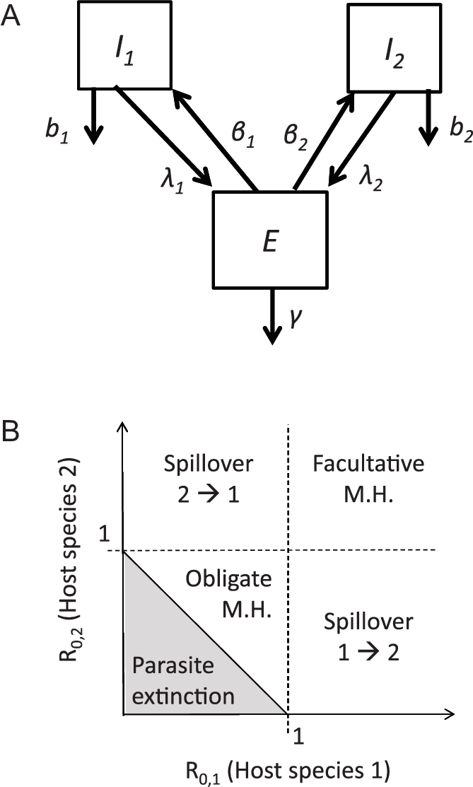 A, Schematic diagram of the homogenous transmission model