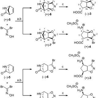 Mutant Wiring Diagram Schematic Representation Of The Gaba Metabolic Pathway In