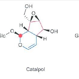 (PDF) Monoterpenol Oxidative Metabolism: Role in Plant