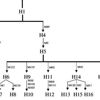 (PDF) Y chromosome haplotypes reveal prehistorical