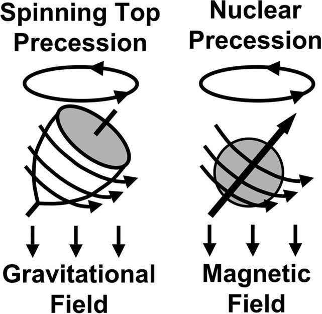 Precession of a spinning top and nuclear precession