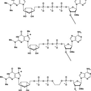 (PDF) 2 '-BISPYRENE-MODIFIED OLIGO (2 '-O