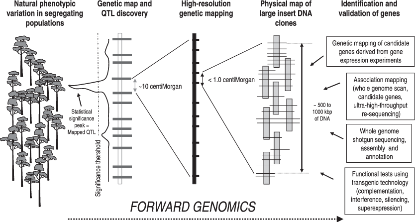 Schematic representation of the forward genomics approach
