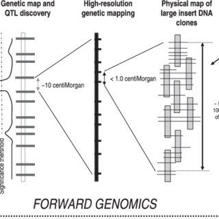 (PDF) Eucalyptus applied genomics: From gene sequences to