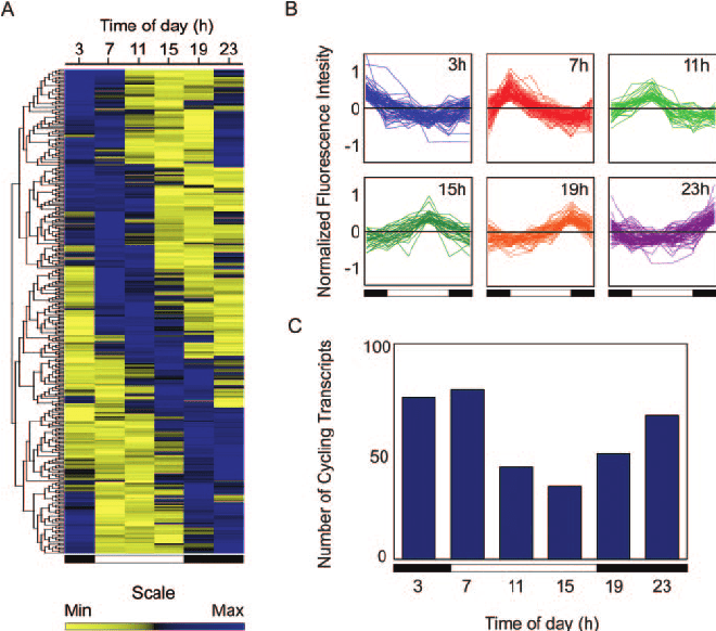 Temporal Gene Expression Profiles in the Rhesus Macaque ...