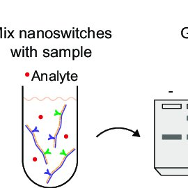 Schematic of the DNA nanoswitch detection technique. (A