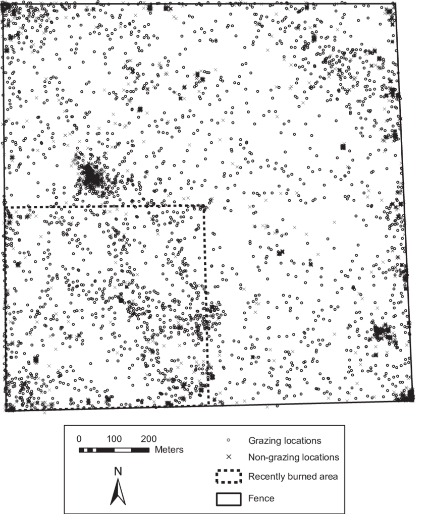 Distribution of GPS locations for a yearling steer