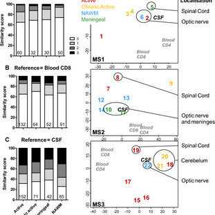 (PDF) Expanded CD8 T-cell sharing between periphery and