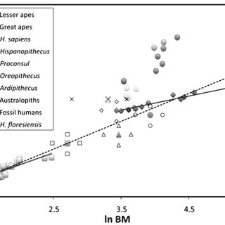 (PDF) Cognitive Inferences in Fossil Apes (Primates
