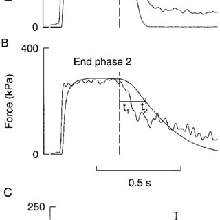 [Ca 2 ] i-force relations of a type 1 fiber in control and