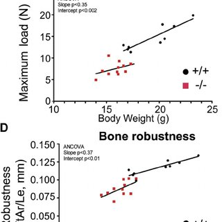 (PDF) Type XII collagen regulates osteoblast polarity and