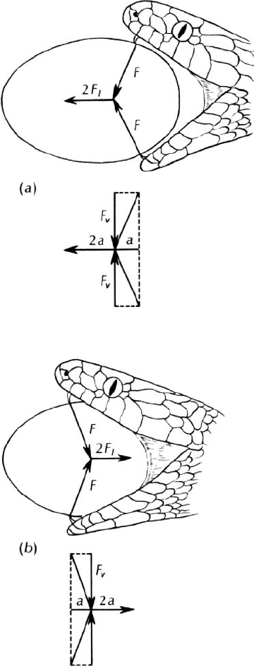Vector analysis of the forces applied to an avian egg