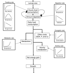 flow chart depicting the foraging bioenergetics model for age 0 pallid sturgeon the [ 850 x 1133 Pixel ]
