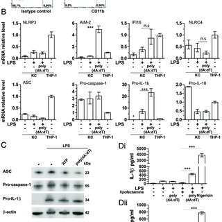 (PDF) Characterization of the Inflammasome in Human