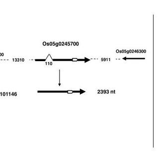 (PDF) Identification of precursor transcripts for 6 novel