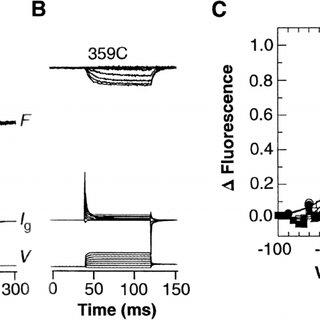 (PDF) Use of voltage clamp fluorimetry in understanding