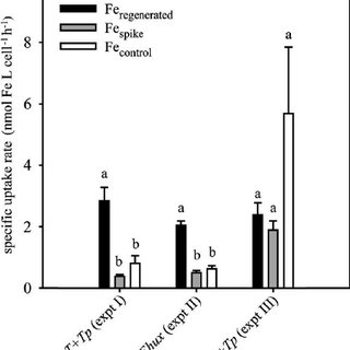 Comparison of intracellular uptake rates of Fe to T