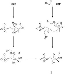 conversion of dxp to mep catalyzed by mep synthase r ketol rearrangement vs retro [ 850 x 1354 Pixel ]