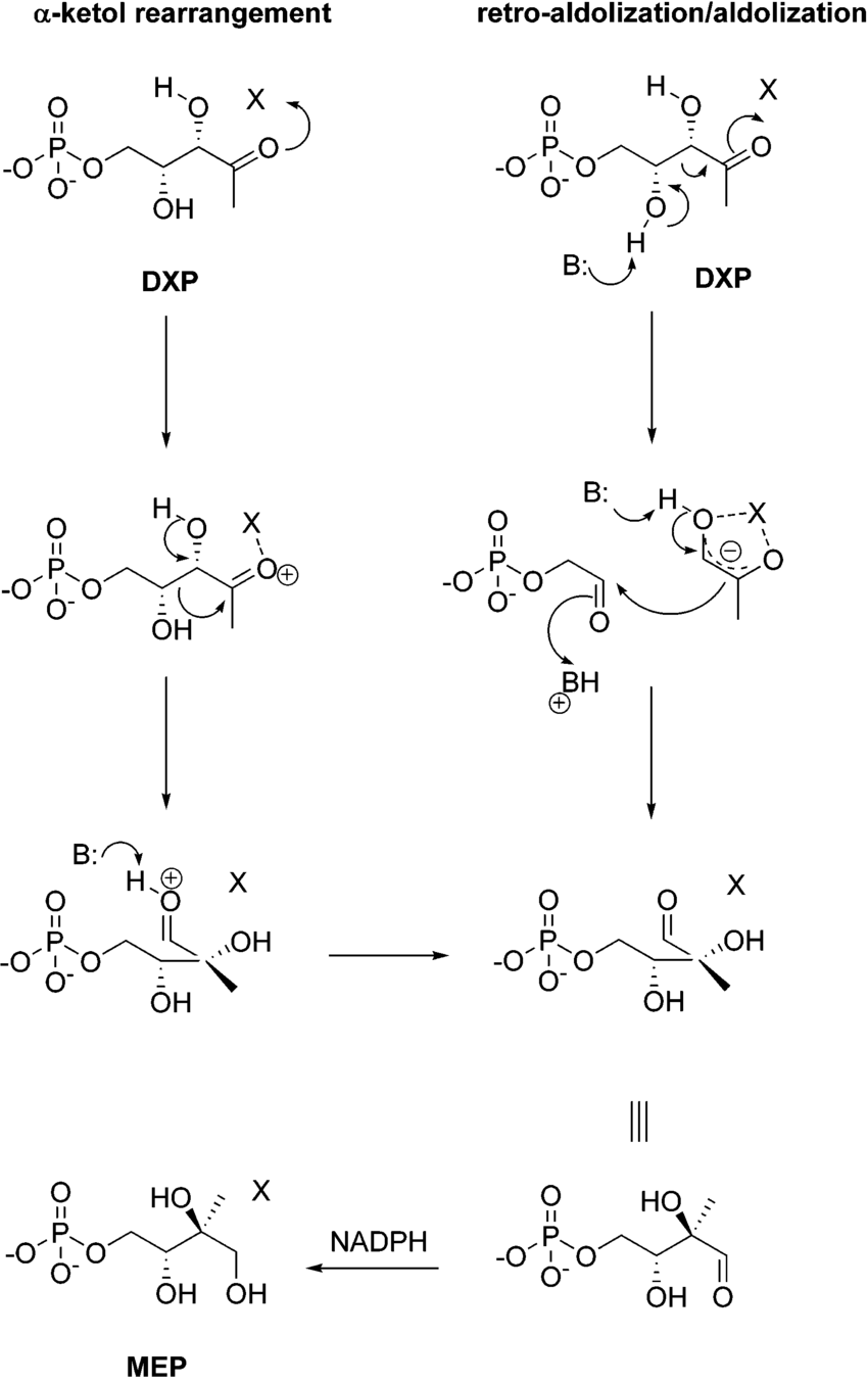 hight resolution of conversion of dxp to mep catalyzed by mep synthase r ketol rearrangement vs retro