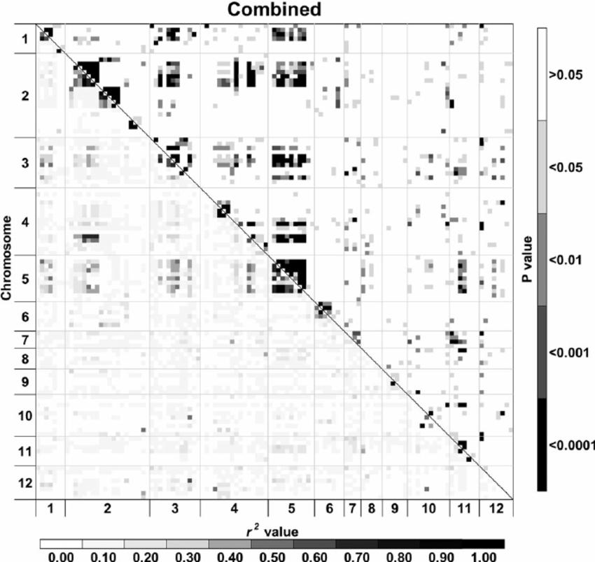 Heat maps of linkage disequilibrium (LD) values ( r 2