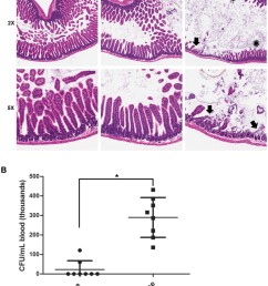 dose dependent effects of anthrax lt on the intestinal barrier a c57bl [ 850 x 1111 Pixel ]