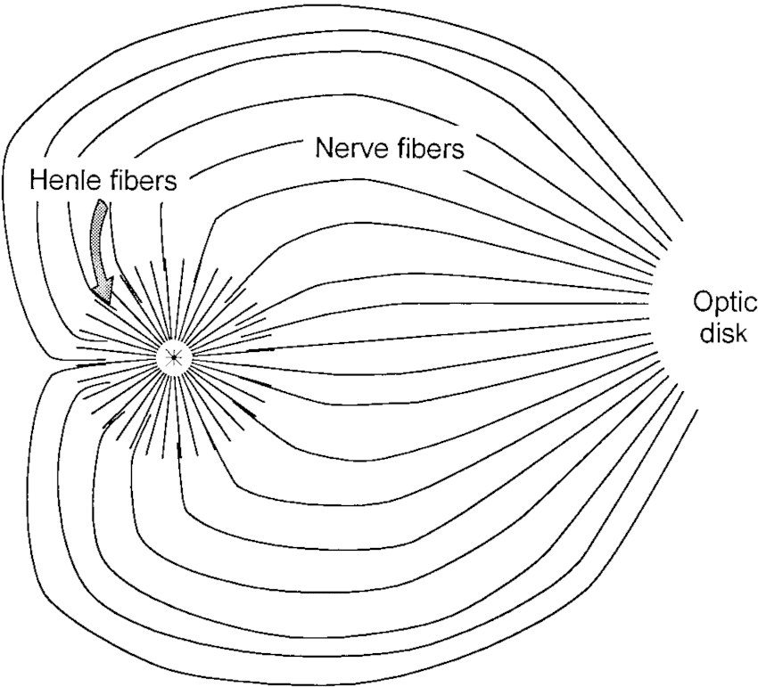 Schematic drawing of the retinal nerve fiber axon