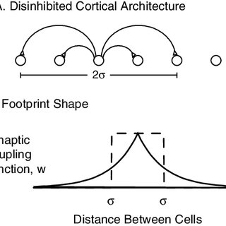 Schematic diagram of the model architecture. A. Neuronal