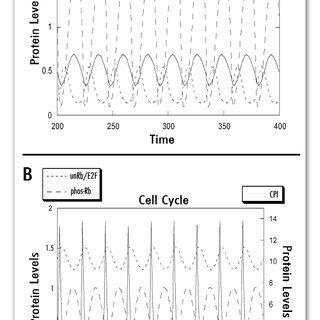 Cell cycle-dependent occupancy of histone H4 promoter by