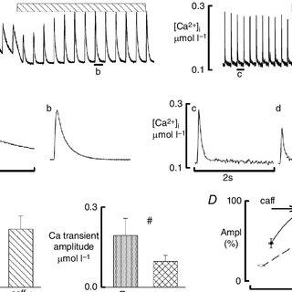 Ca2+-dependent [3H]ryanodine binding of WT and mutant