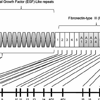 (PDF) Expression of tenascin-C and its isoforms in the breast