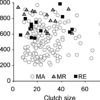 Relationship between clutch size and egg mass in female