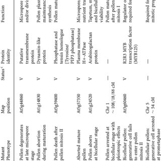 Morphological stages of microsporogenesis and