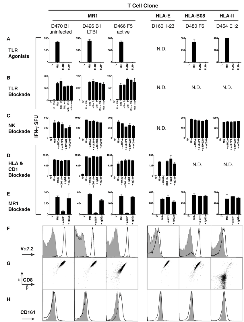 Mtb-specific NC CD8+ T cells are restricted by MR1. (A–E