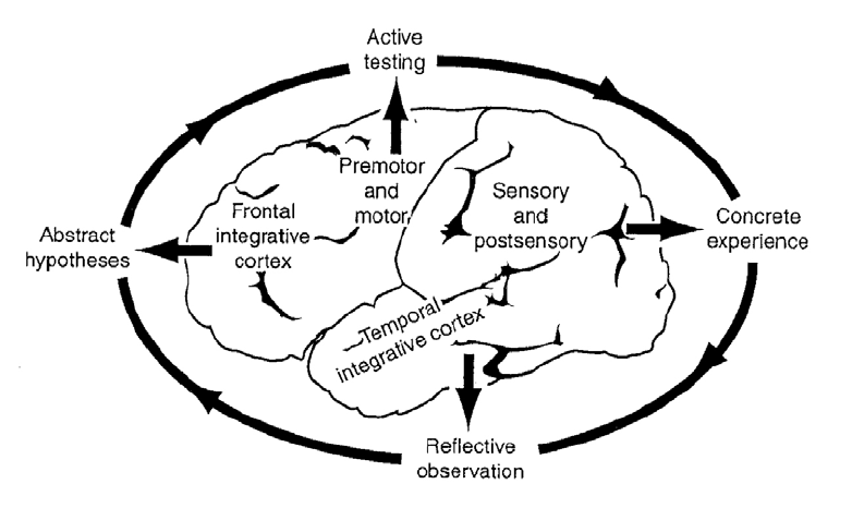The experiential learning cycle and regions of the