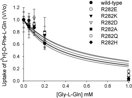 Inhibition of [3H]-d-Phe-l-Gln uptake by increasing